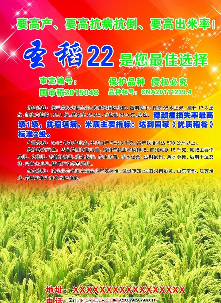 圣稻22彩頁,圣稻彩頁,農作物彩頁,米,設計,廣告設計,300DPI