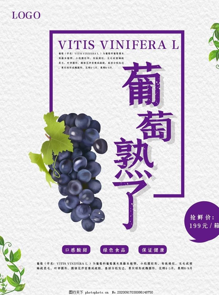 葡萄采摘,葡萄展板,葡萄園展板,采摘葡萄海報,葡萄熟了海報,采摘園,新鮮葡萄